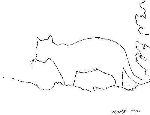 Sketch Of Cougar